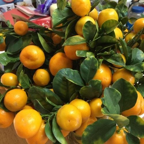 Mae Tat, Child Welfare SErvices, Grows Kumquats