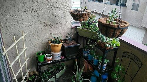 Elizabeth miller, clerk of the board, has an herb garden on her patio