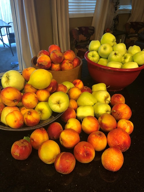 Nadine lathan, child welfare services, grows apples and nectarines.