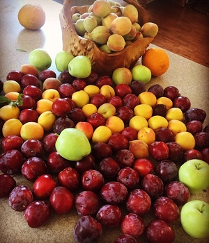 travis payne, parks and recreation, grows apples, plums, apricots and peaches