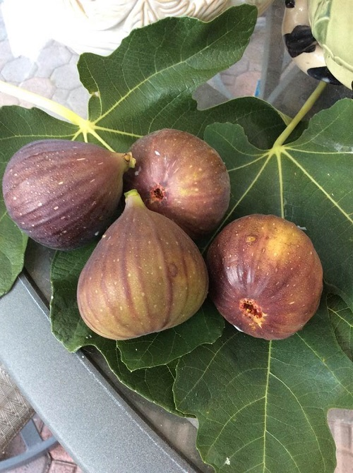 Ressie Ramos, Aging & Independent Services, Grows figs