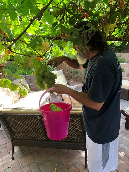 Alfredo Villalba, BHS Children Youth and Families - Camino, grows grapes