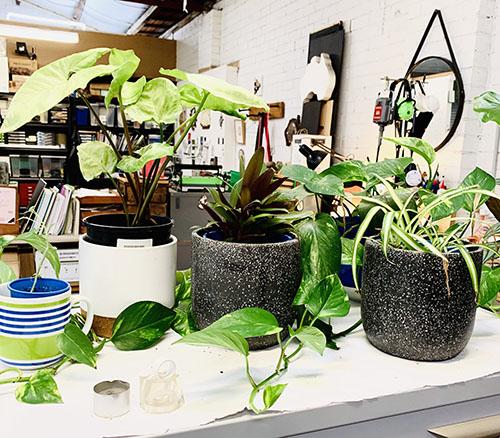 indoor garden.jpg