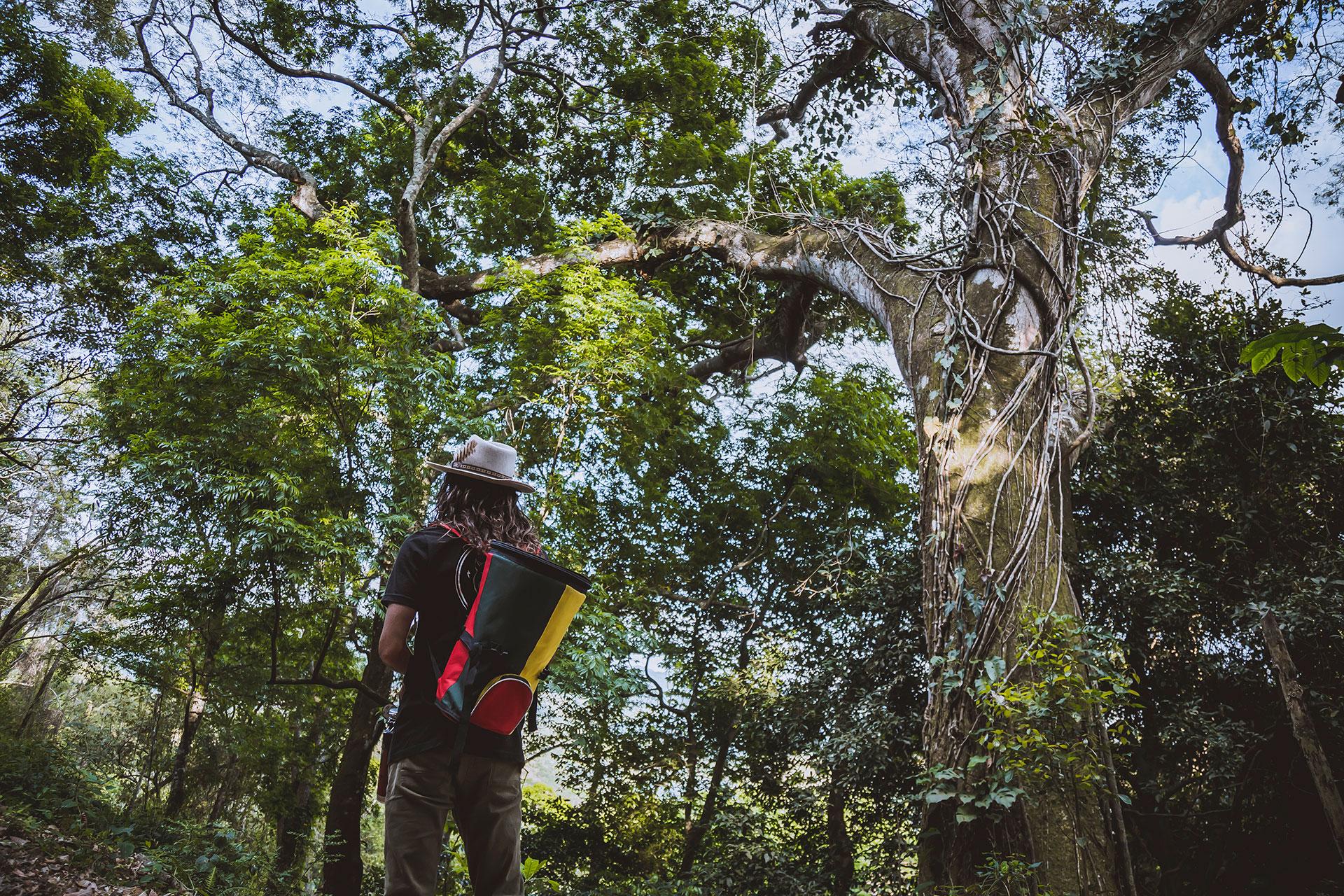 Alegria-tour-trees.jpg