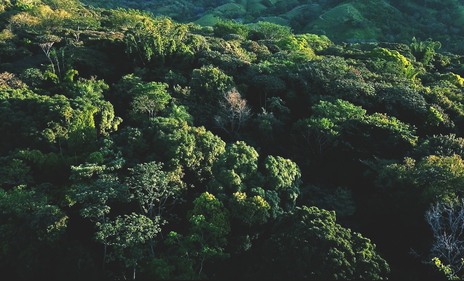 Protect Our Ecosystem   As we build our community, Alegría is reforesting our 70-hectare property, protecting our natural environment, waterways, and wildlife habitats.   Learn More