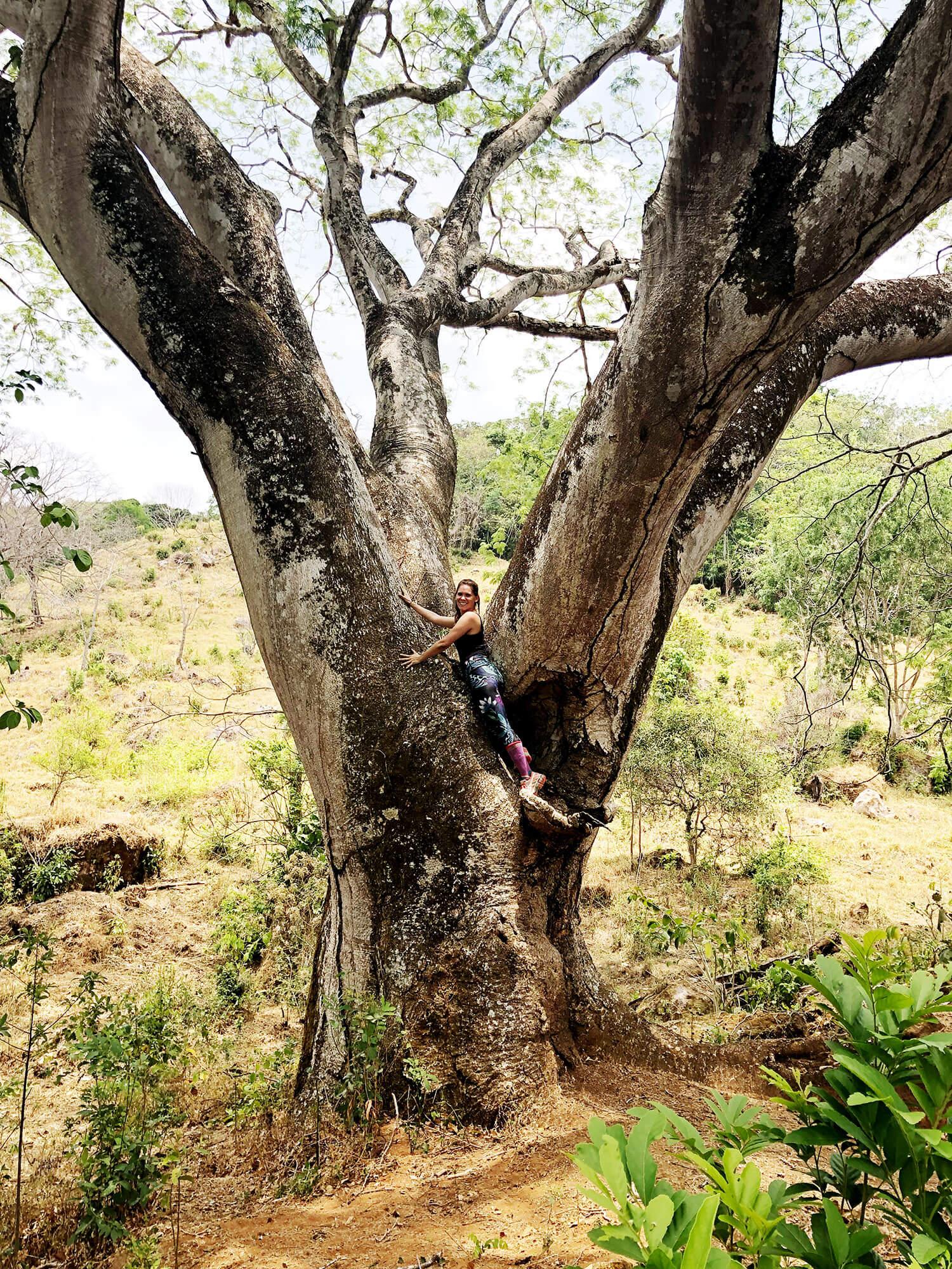 the-land-kara-in-guanacaste-tree.jpg