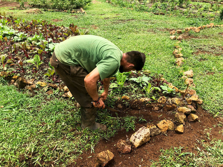 garden-farm-working.jpg