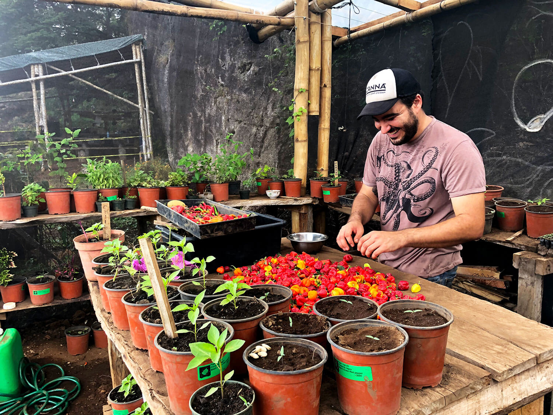 garden-daniel-peppers.jpg