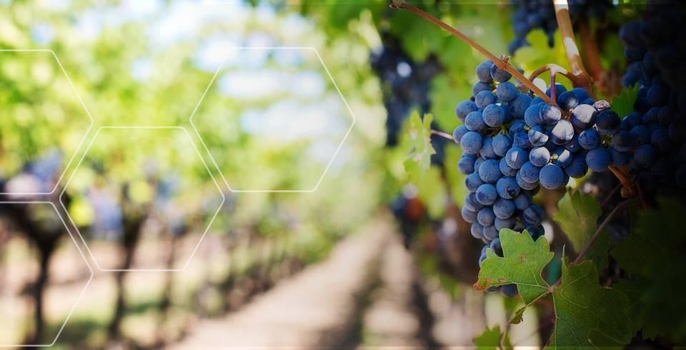 purple-grapes-553463_960_720.jpg