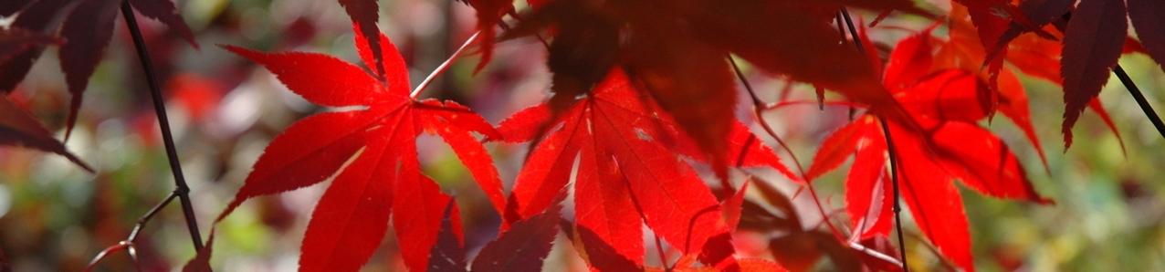 fall-foliage-1383538-1279x850.jpg