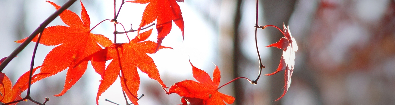 nature-9-1469815.jpg
