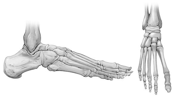 foot bones.jpg