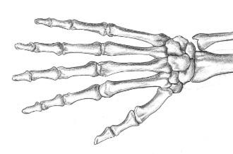 feldenkrais hand.jpg