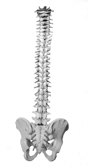 feldenkrais spine.png