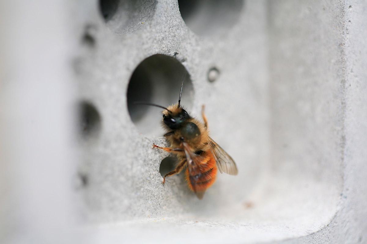 solitary-bee-week-creative-campaign