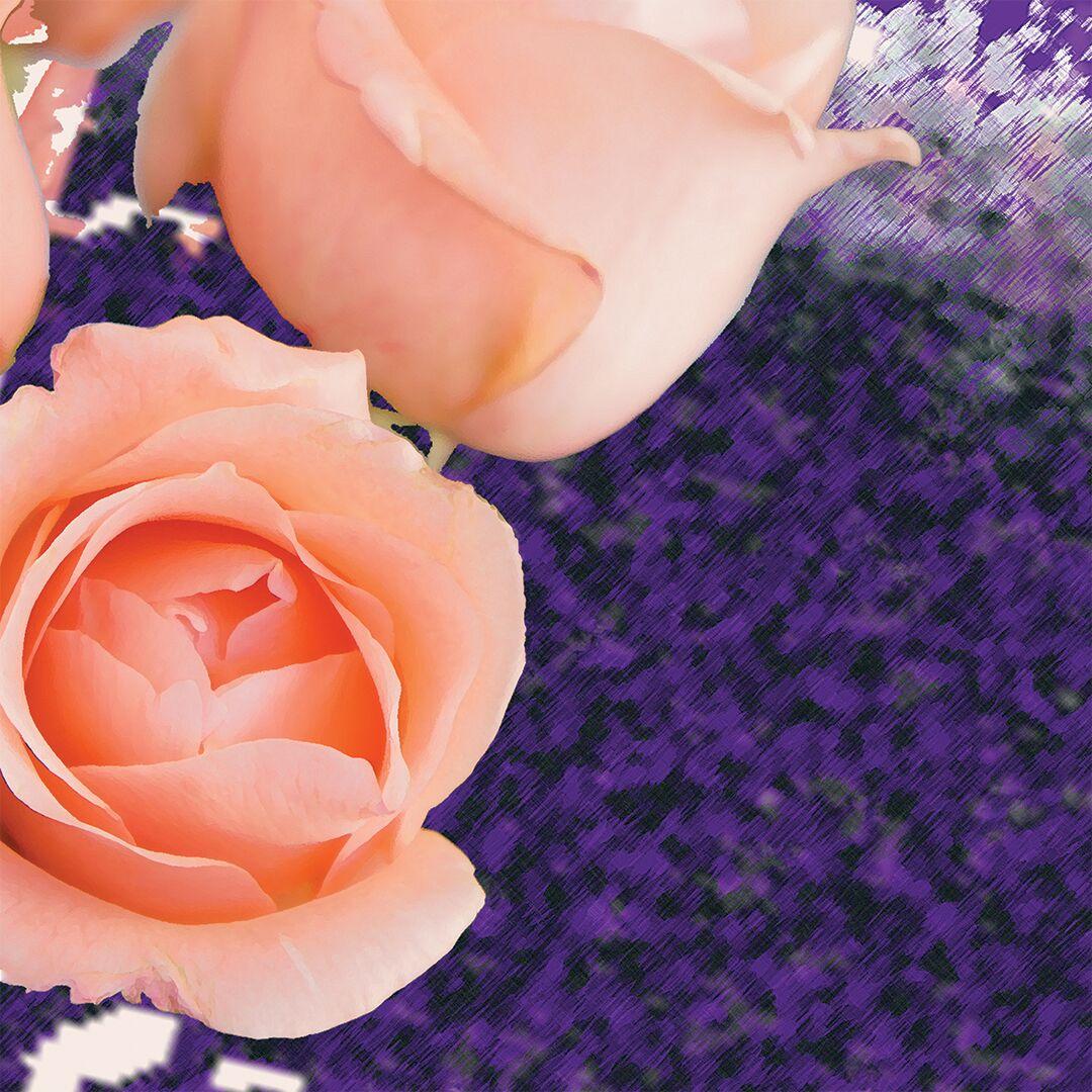 Spring Rose -