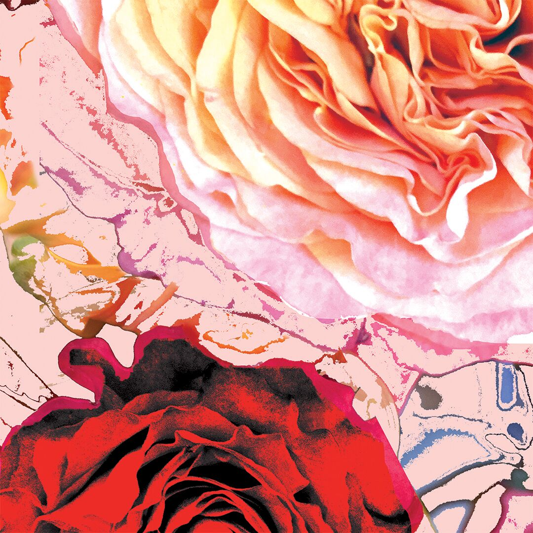 Cacophony of Roses -