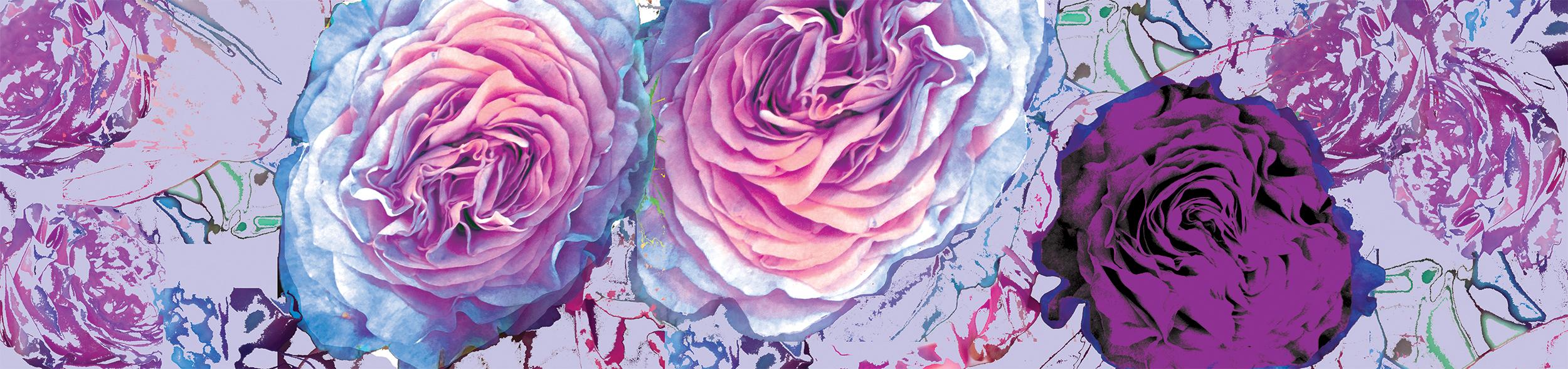 Cacophony of Roses.Website Banner.jpg