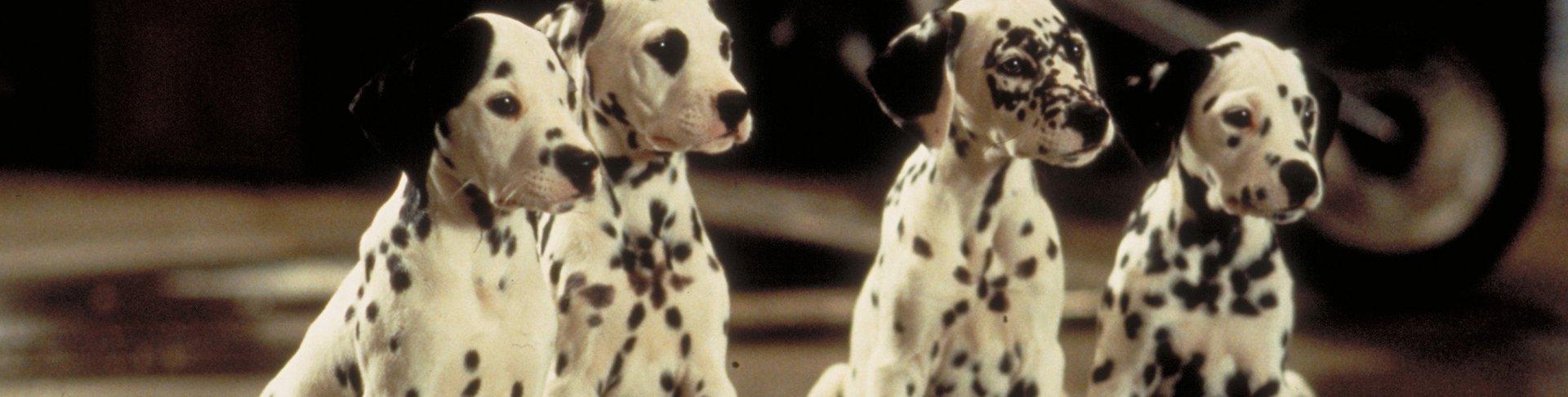 059 101 Dalmatians 1996 Shoulder Cats Radio