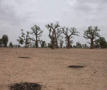 Barren landscape.jpg