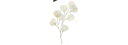 botanical5.png