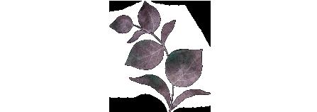 botanical3.png
