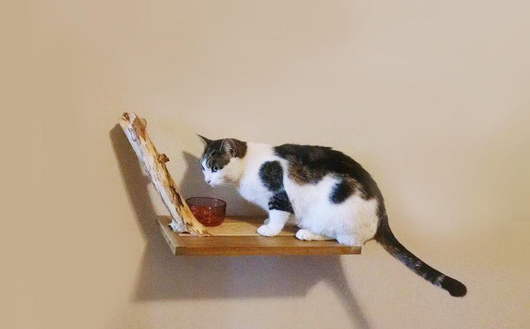 Cat Shelf_Tonks.jpg