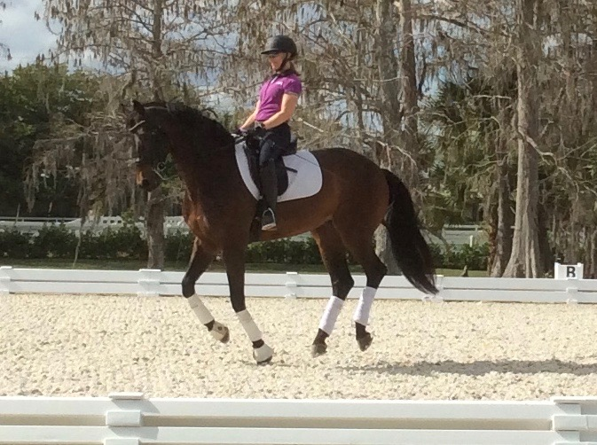 Ripline - A 11 year old Danish WarmbloodRipline has been shown through the Grand Prix level with his past owner. Rowan is excited for what the future holds for the two of them.