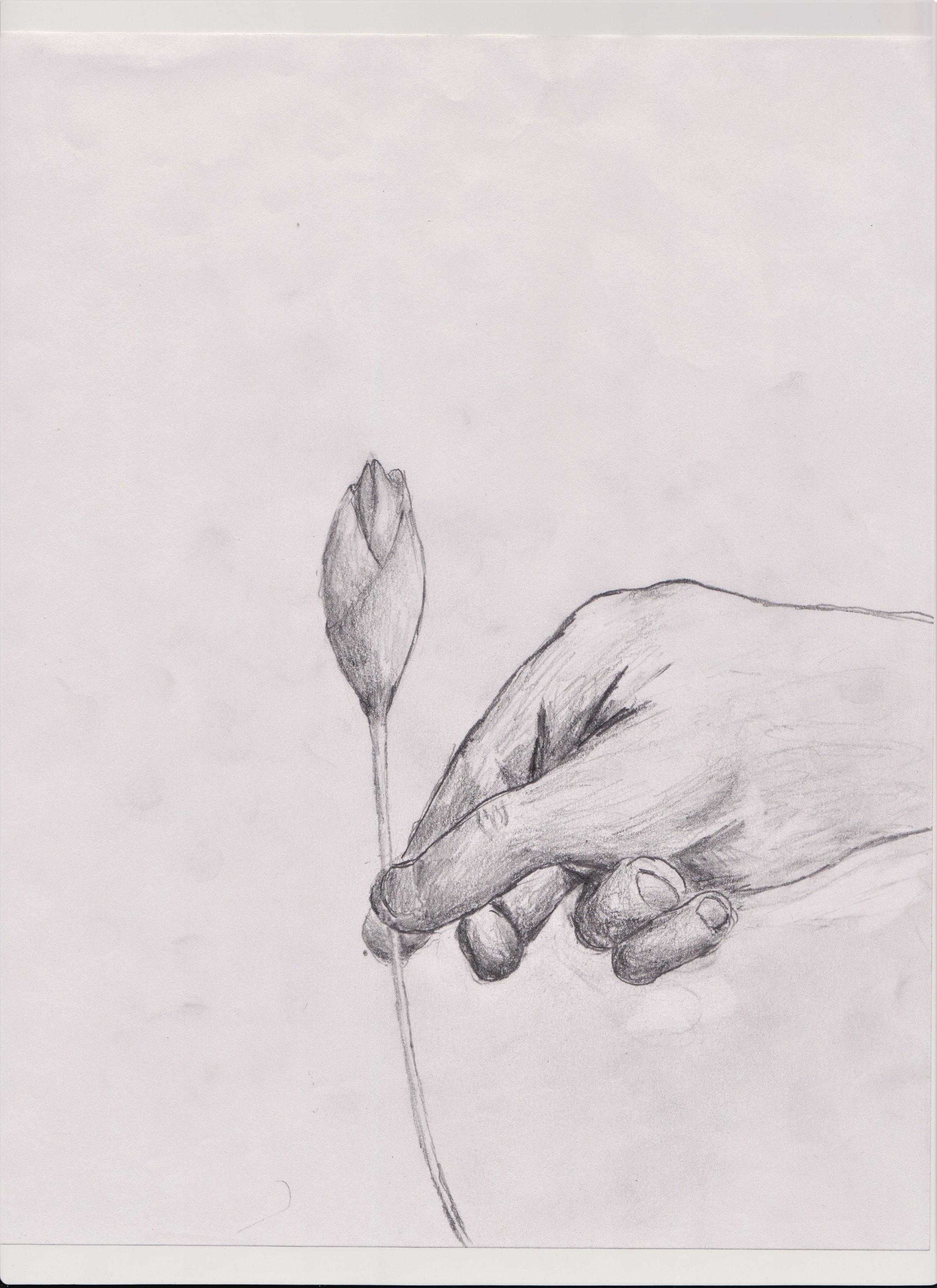 Rose 1.jpg