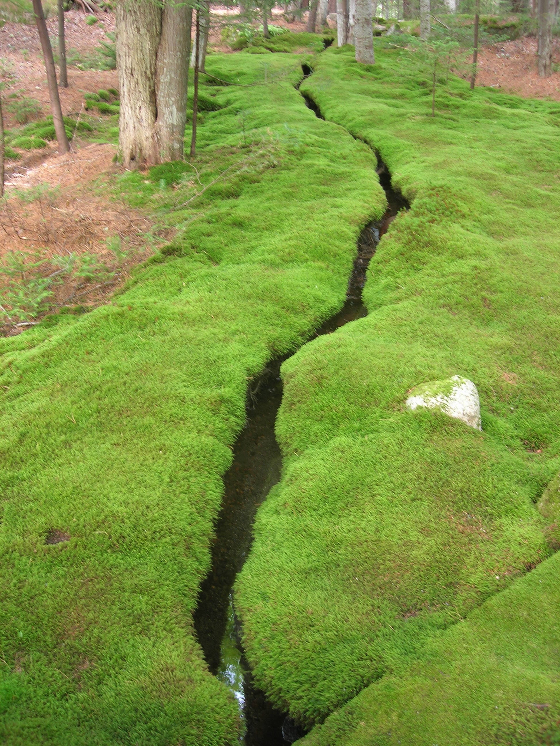 crack in moss.jpg
