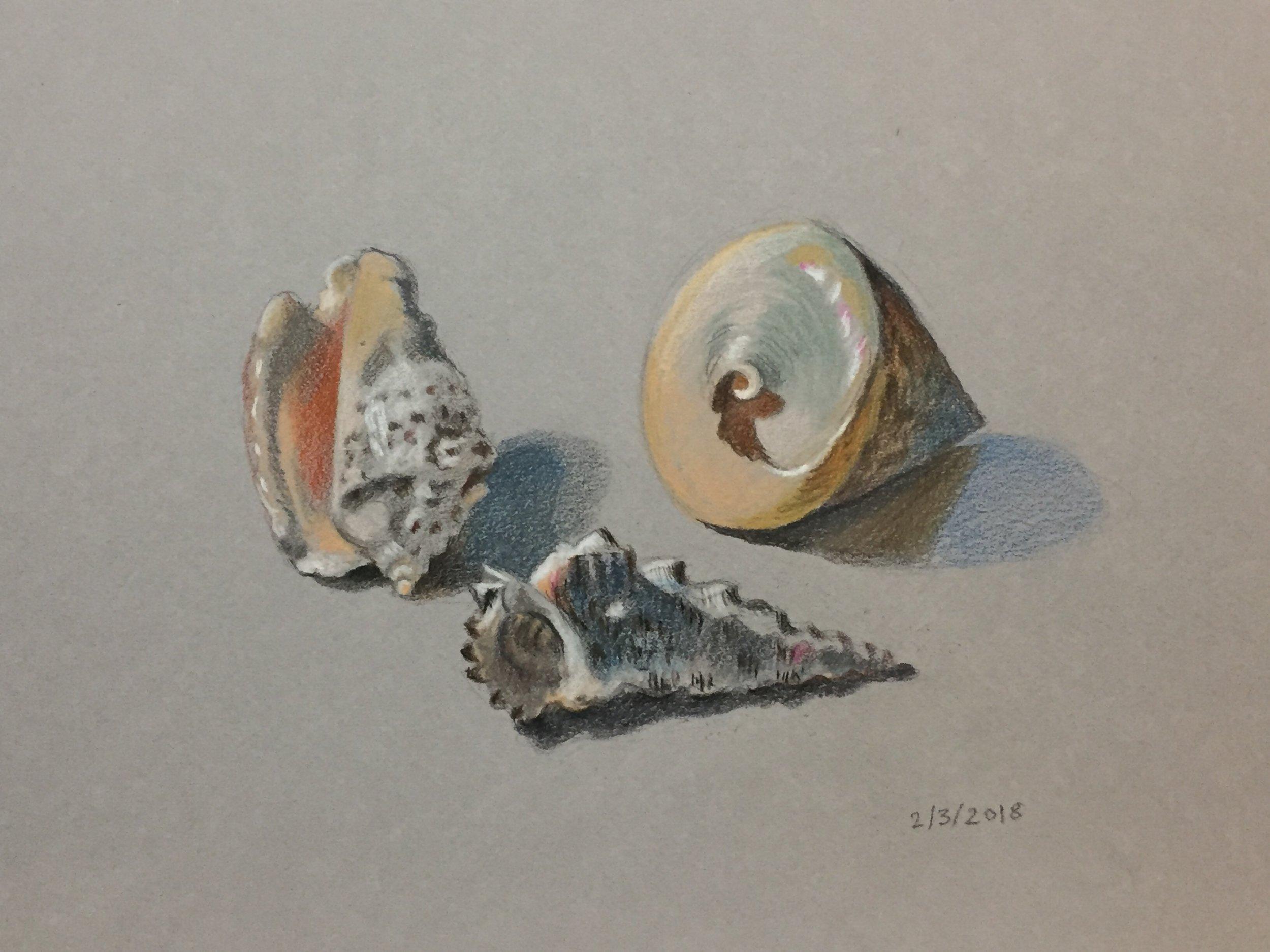 """Shells  4"""" x 6"""", colored pencil"""