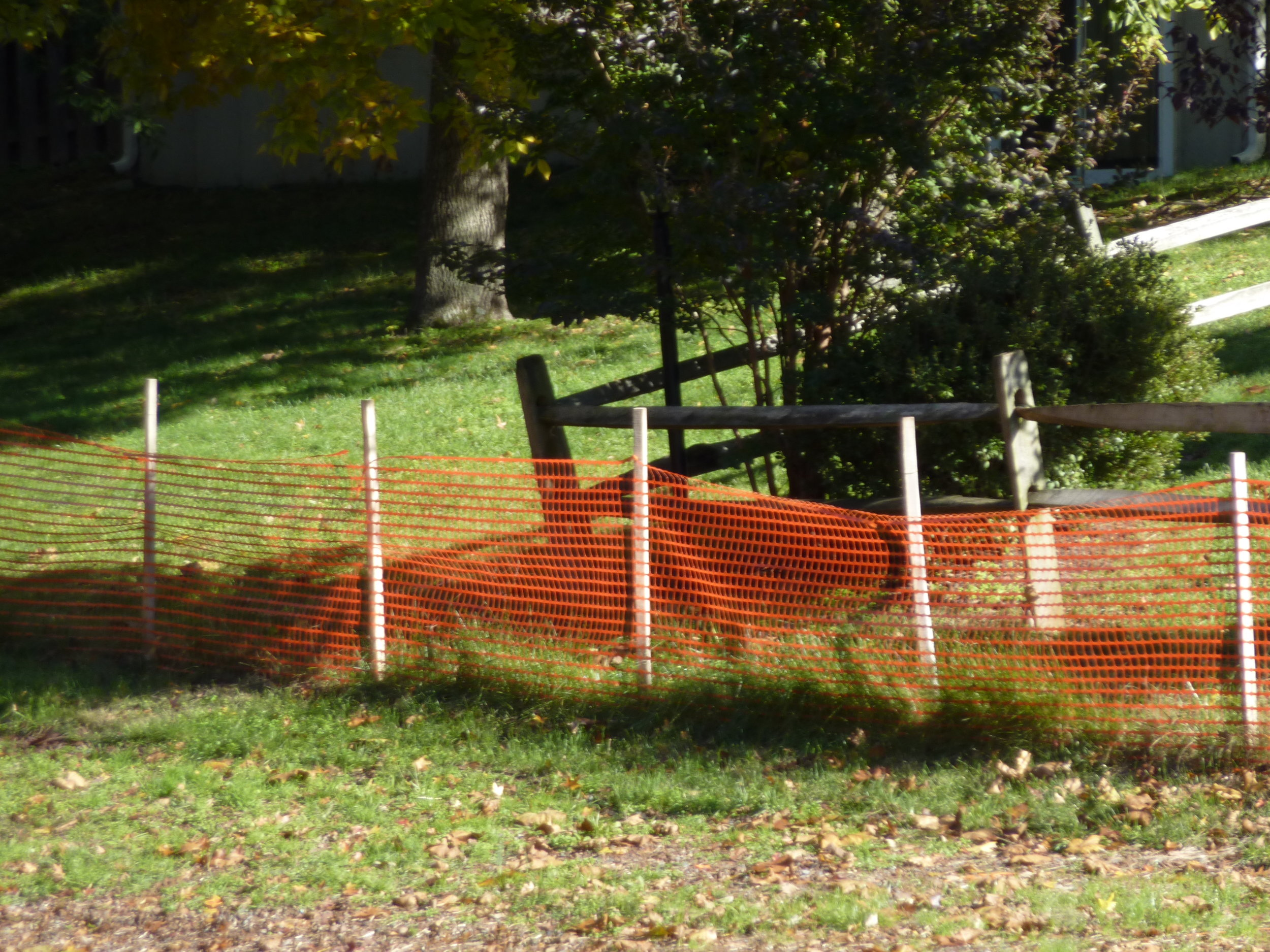 orange fence.jpg