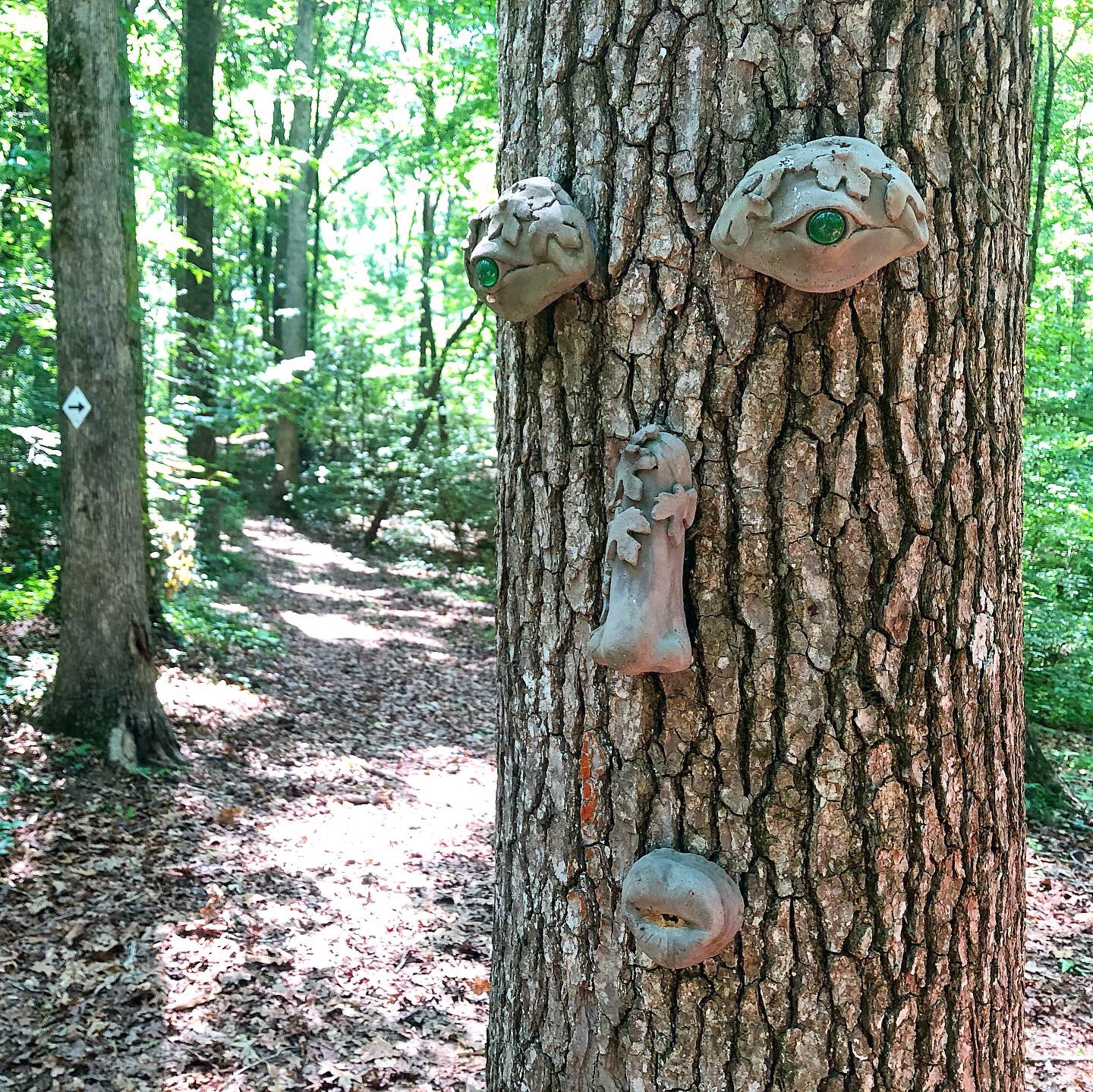 Tree faces on the trail.