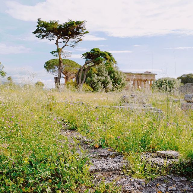 Located off the coast of the Tyrrhenian Sea, Paestum was originally called Poseidonia by the Greeks. Coins which have been minted during this time are inscribed with the words 'Posidonia'. . . . Read more about Paestum and how to get there on the blog. . . .  #wonderfulplace#whatitalyis#ilikeitaly #ig_italy#weekly_feature#foto_italiane#likerome#top_lazio_photo#instagood#leicaq#leicaphotography#leica #theprettycities #lensculture#bbctravel #italytrip#browsingitaly  #instaitalia#discoveritaly #framesofitaly#lonelyplanet#gf_italy #cntraveler #best_italiansites#travelawesome#travelandleisure  #instatravel#ancientruins #romanruins #paestum