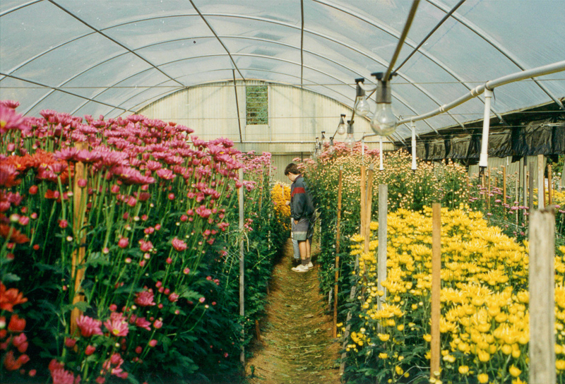 Eloura Flower Farm