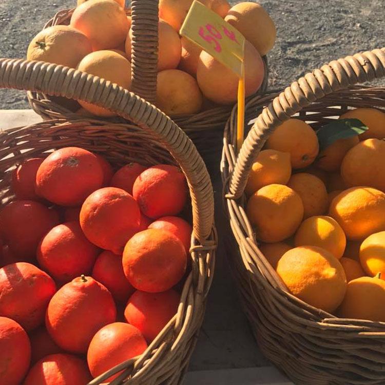 Comboyne Orchard - Food & Drink