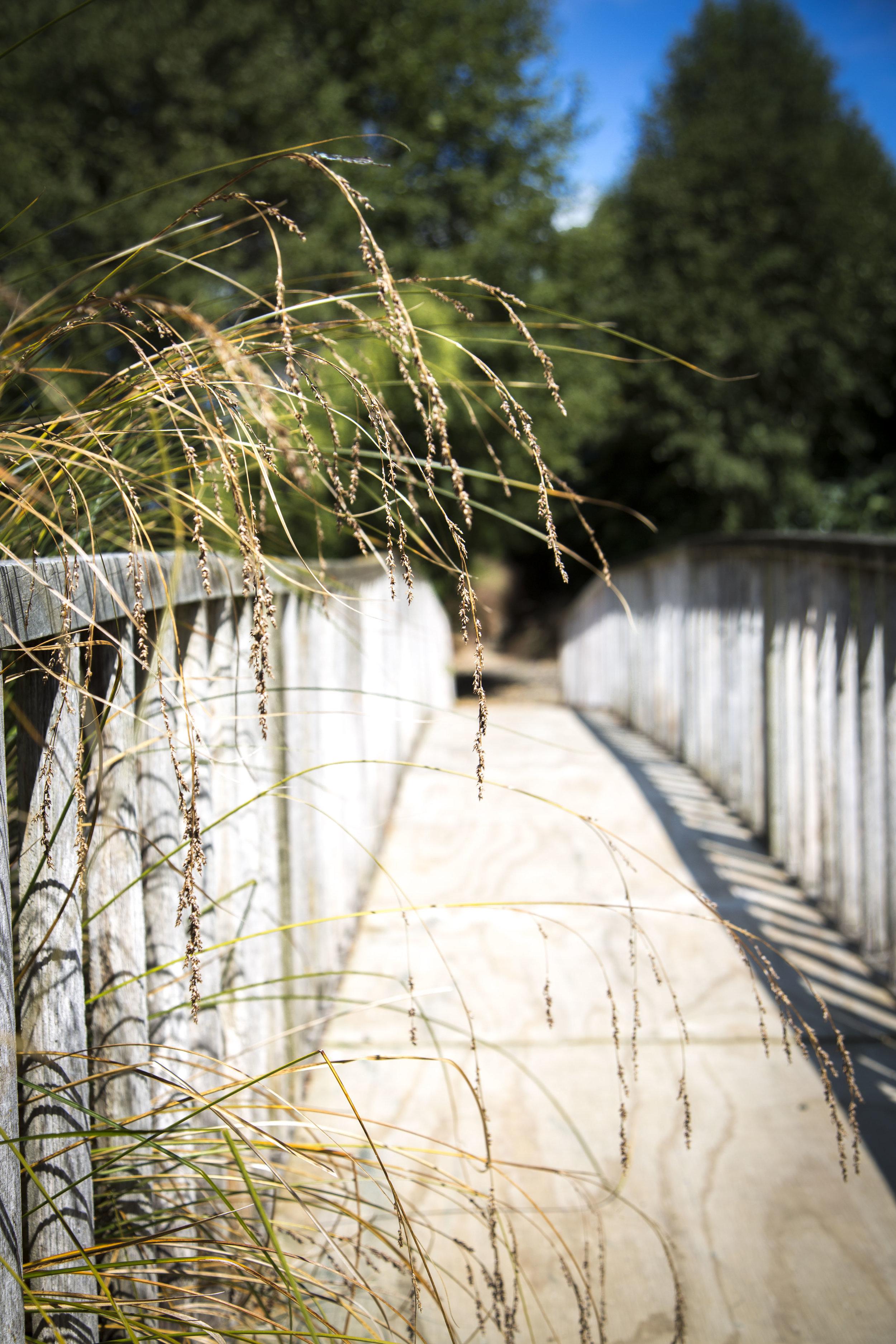 Hideaway Gardens310.jpg