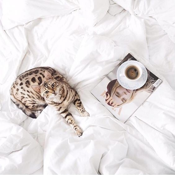 Sunday meowrning and were feline fine! 🐾☕ . . . . .⠀ .⠀ .⠀ .⠀ #animalshelter #adoptdontshop #furbaby #welovecats #sundaychill #catsofinstagram #cat  #bengalcat #bengal #bengalkitten #petsagram #kittens #ilovemycat #parosshelter #catlover #catstagram #felinefine #animalwelfare #greekislandlife Reposted from @twotailspetcompany