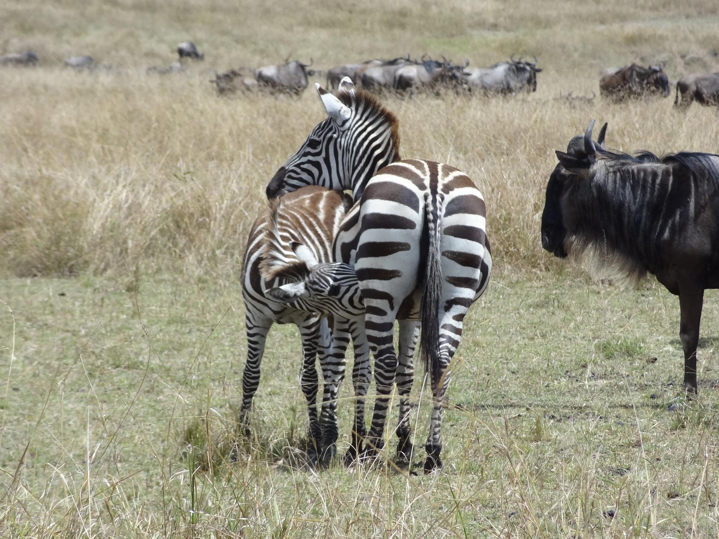 Kenya 2018 037.JPG