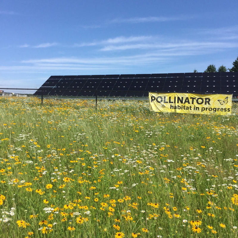 'If You Build It, They Will Come': Saving Pollinator Habitat With Solar Power's Help -