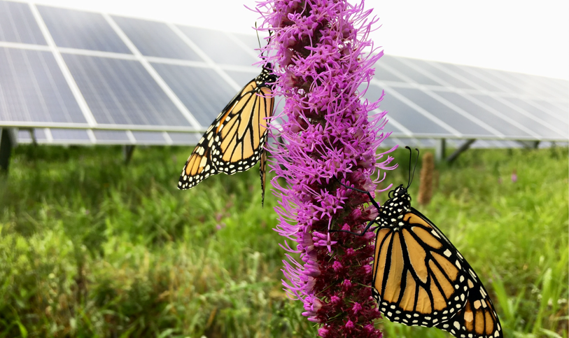 butterfly solar.png