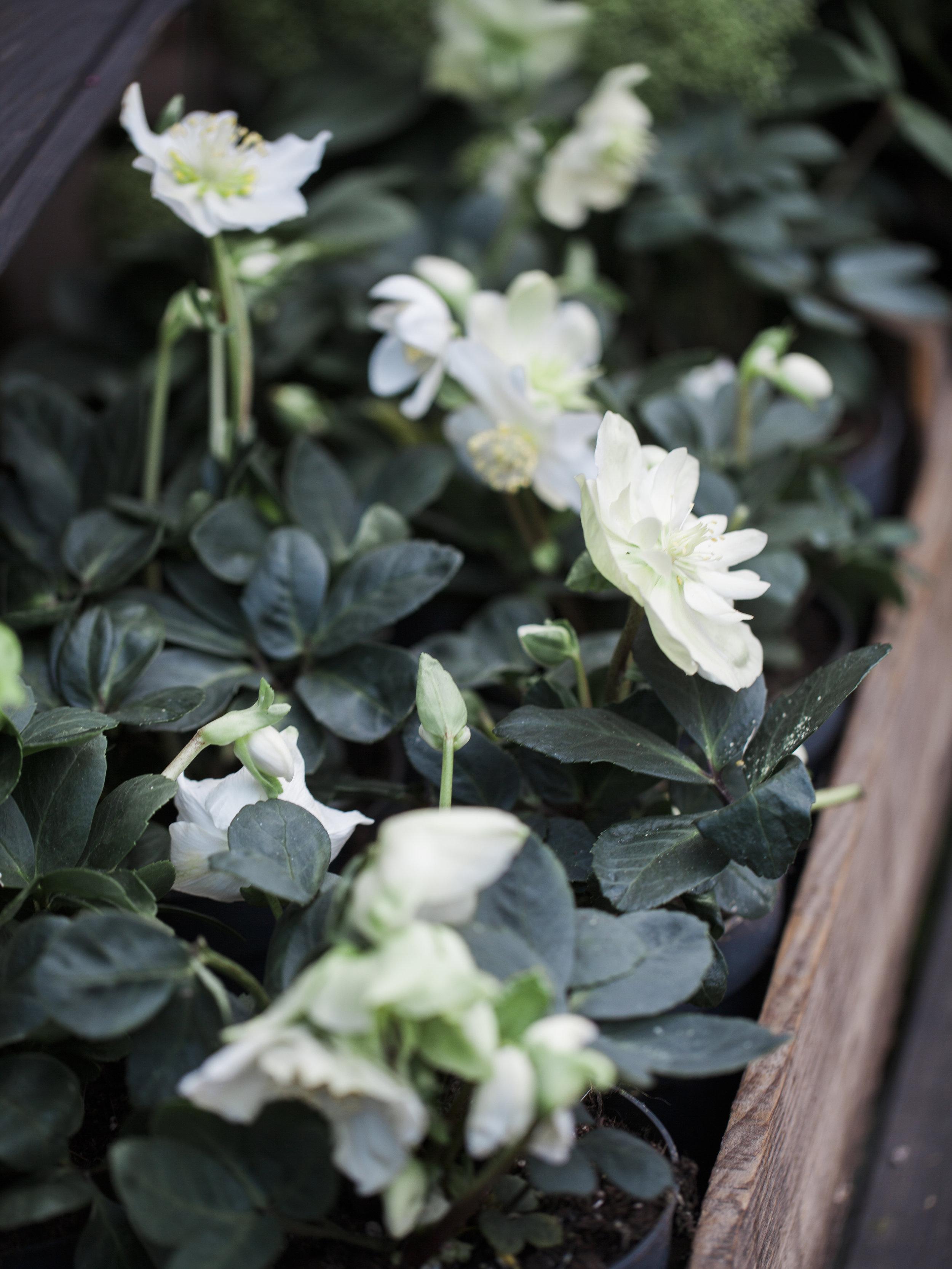 UTOMHUSVÄXTER   I vår uteavdelning har vi växter för trädgården efter säsong. Vi erbjuder ett utvalt sortiment för vackra krukor och rabatter.