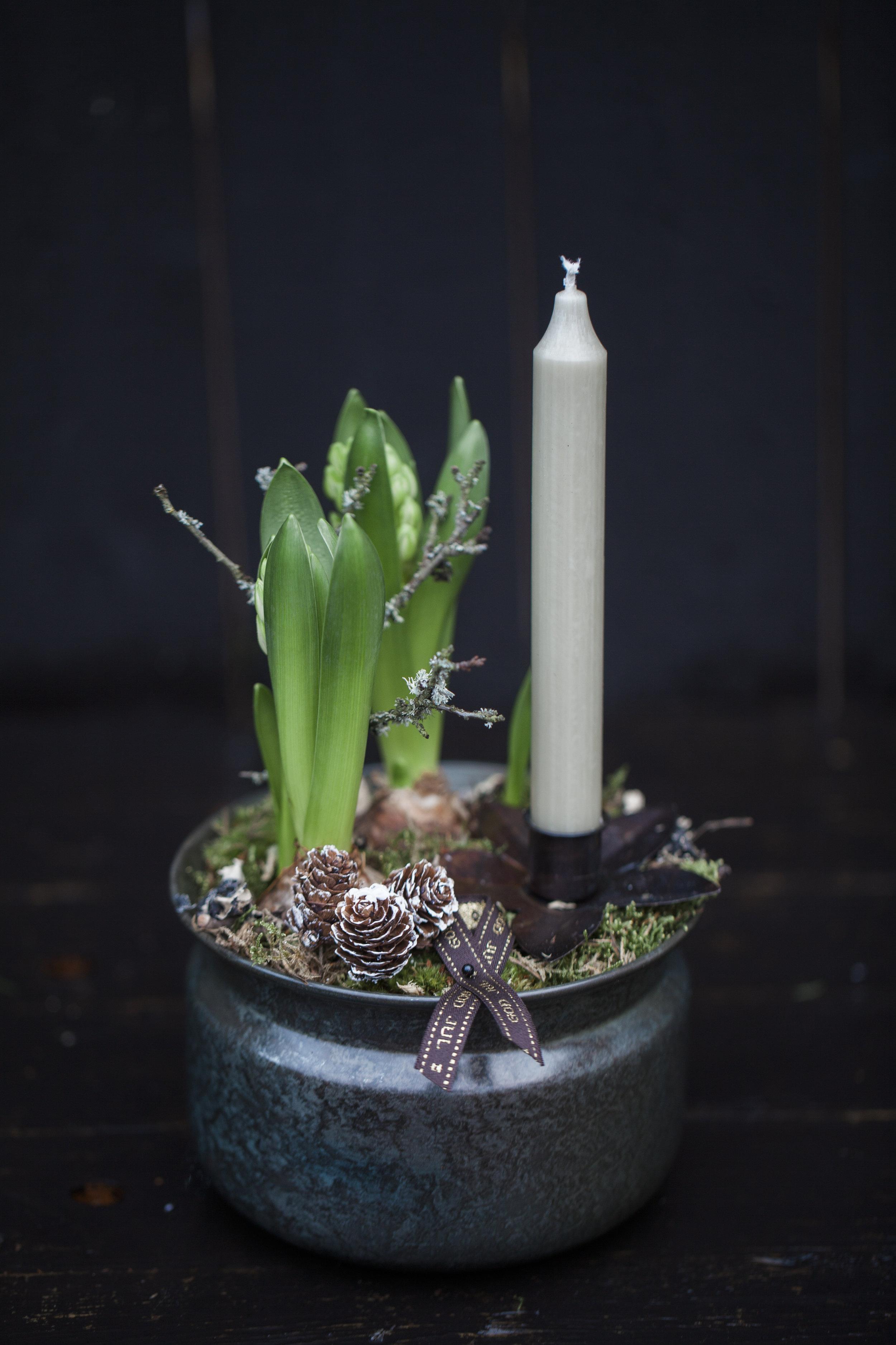 Hyacint m ljus 199:-