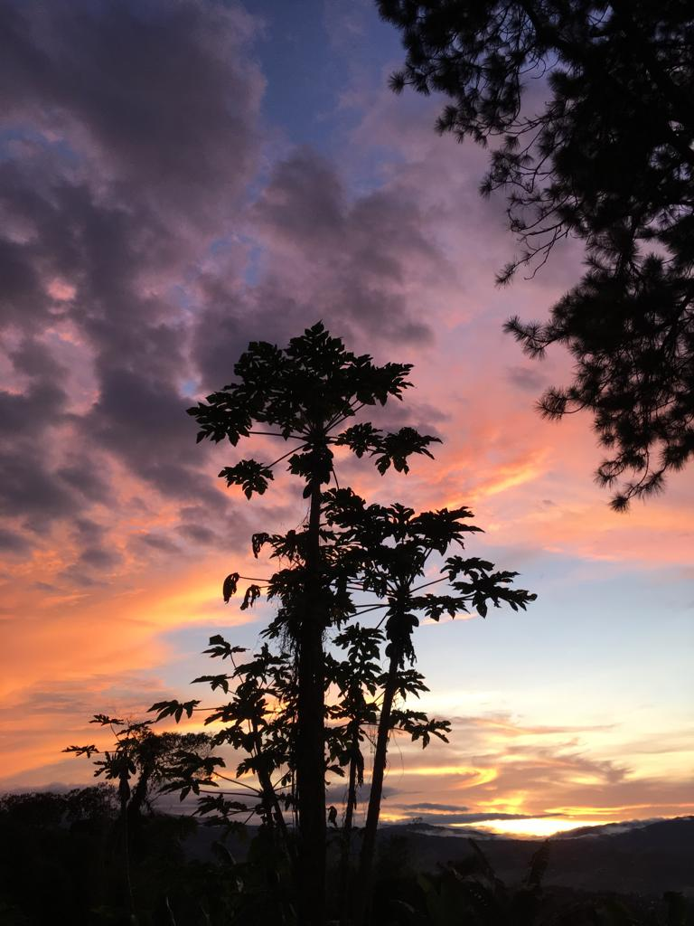 The silhouette of a papaya tree in the sunset at Araucana Lodge.