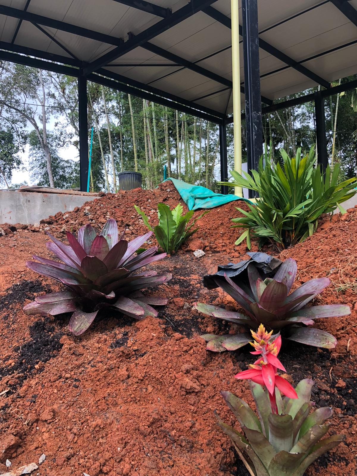 Internal gardens going in, featuring giant bromeliads!
