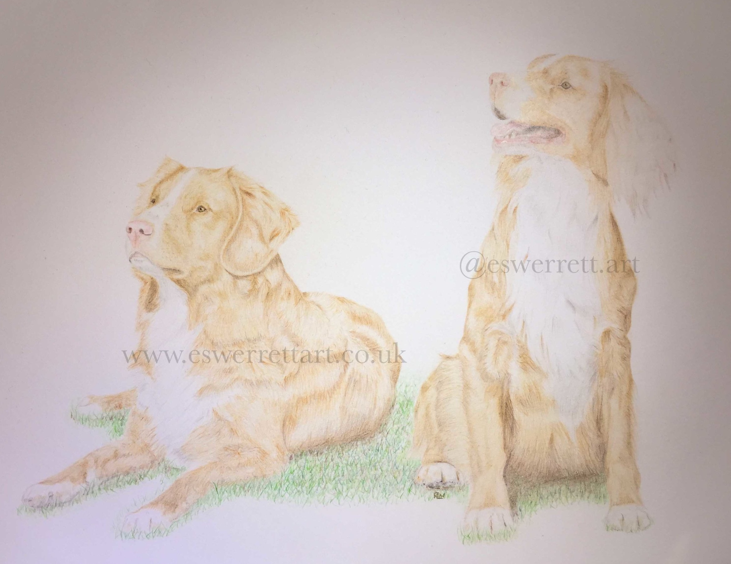 'Endeavour & Teddy'  11 x 14 inches in Coloured Pencil