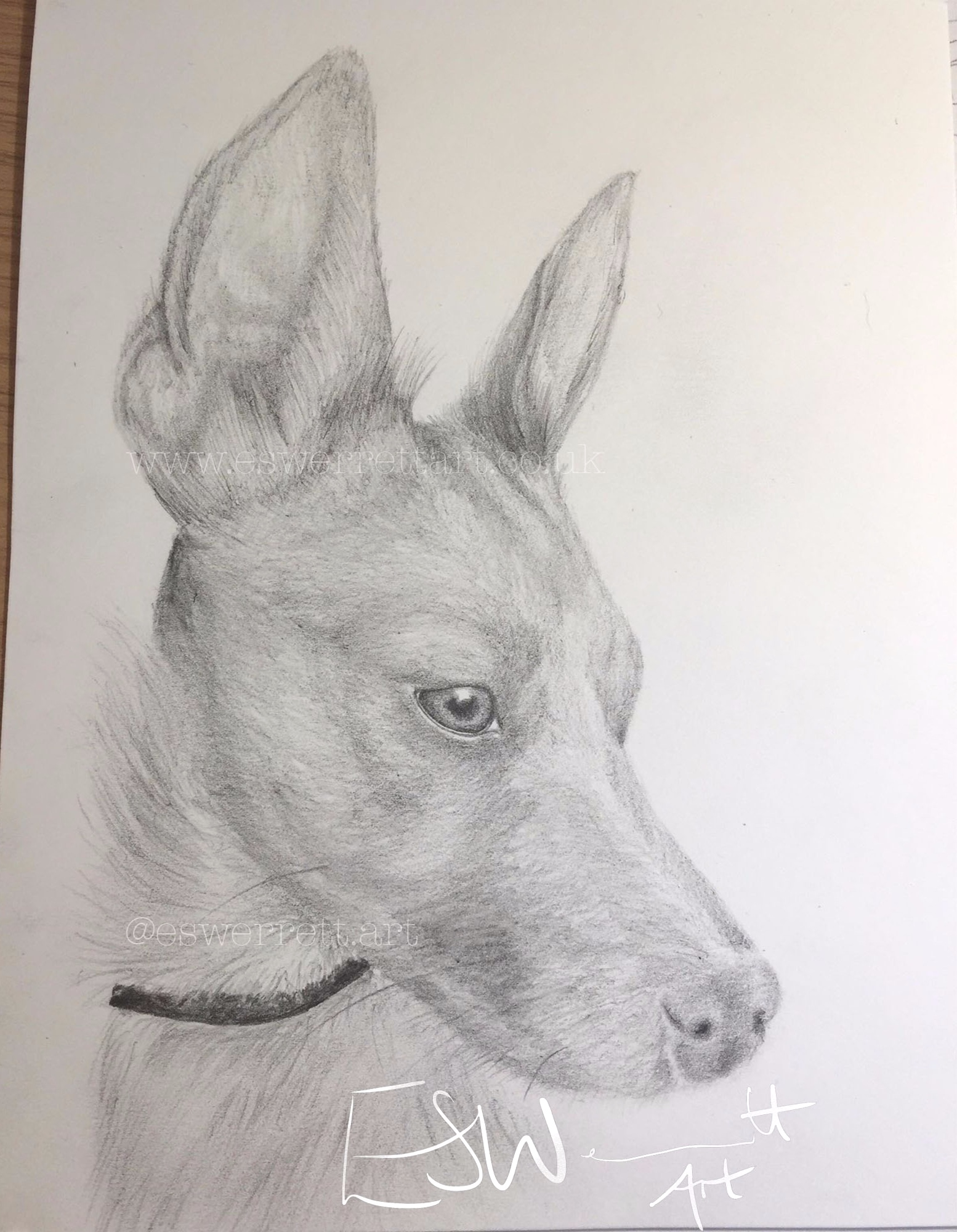 'Nutmeg' - 5 x 7 inches in Graphite Pencil
