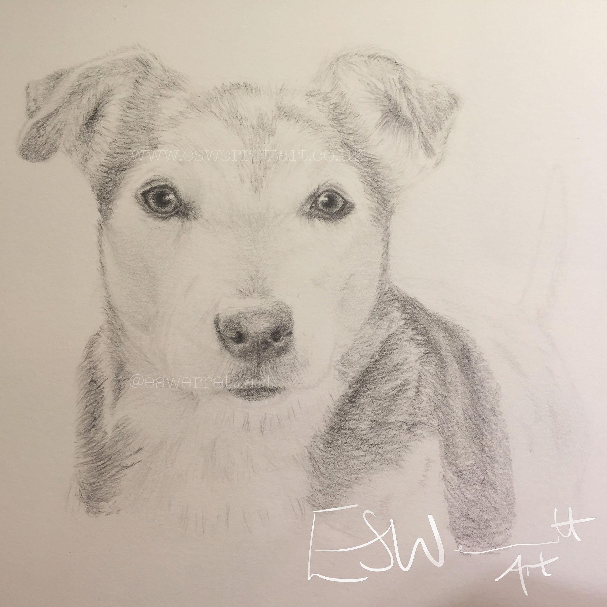 Jack Russel Pencil pet portrait.jpg