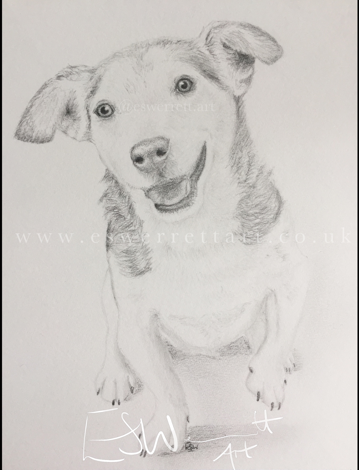 Jack+Russel+Pencil+Portrait.jpg