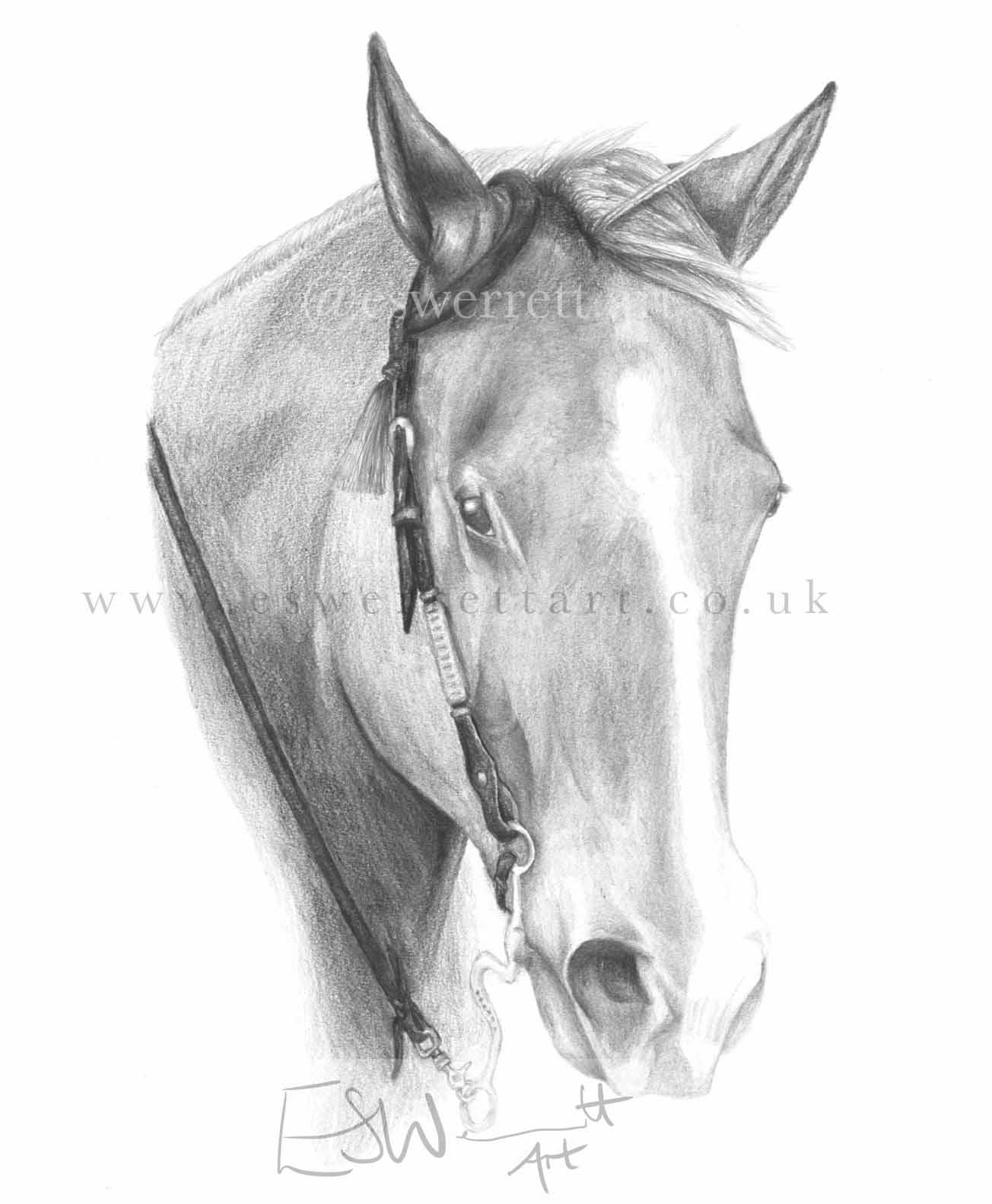 Graphite Pencil Horse Portrait.jpg